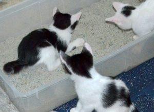 chaton-pipi-hors-bac