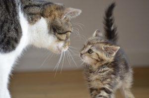 chat-chaton-amis