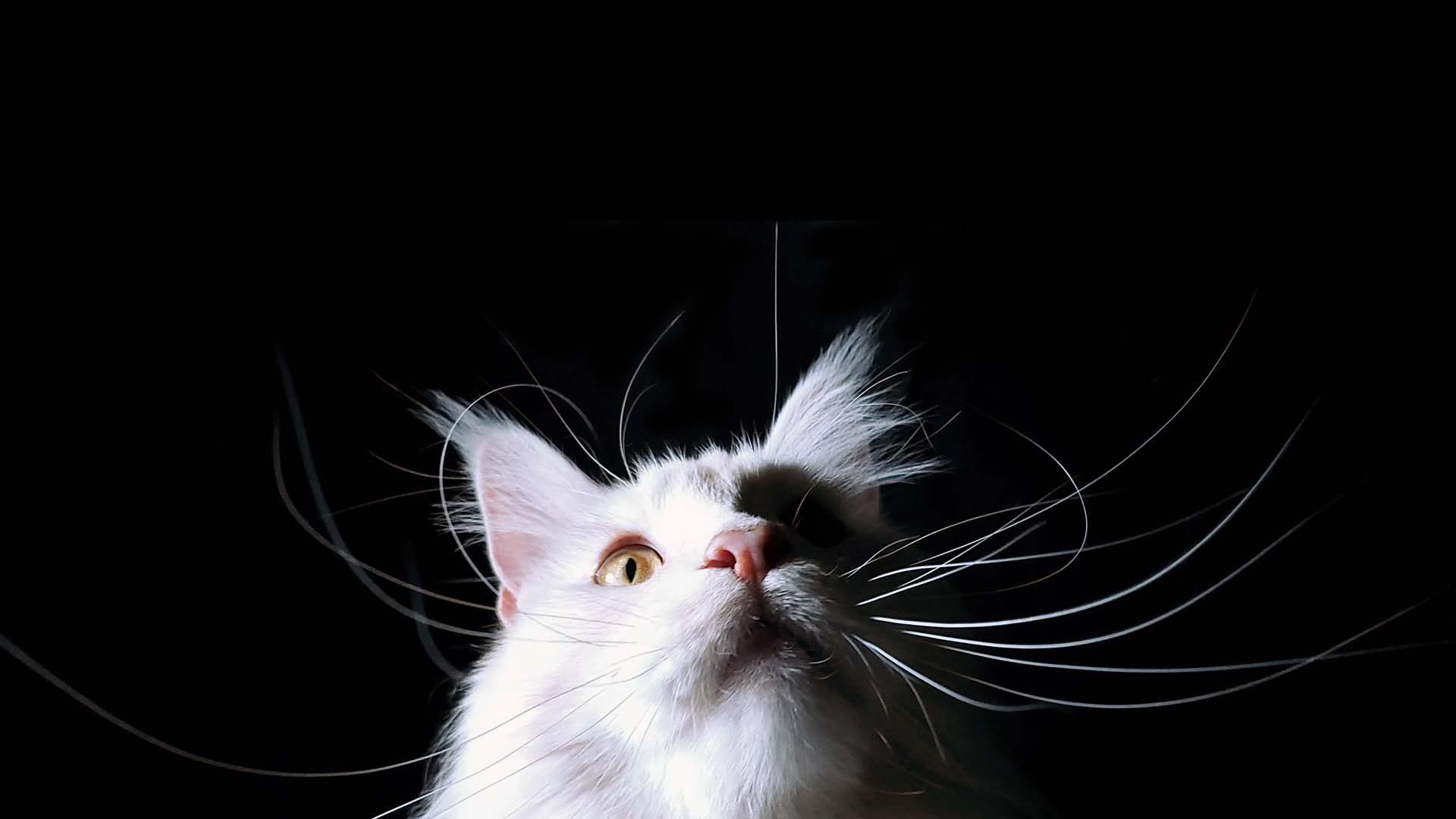 Éduchateur France - Comportementalistes spécialisés chat