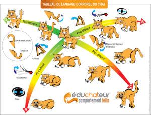 langagcorporel-chat-chaton