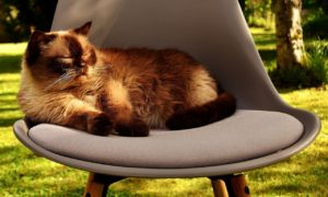 Chat repos dehors