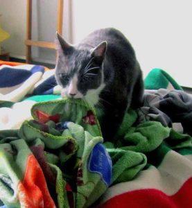 chat tête couverture laine
