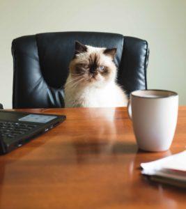 chat saute partout table bureau