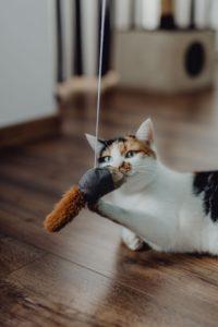 Chat jouet avec ficelle