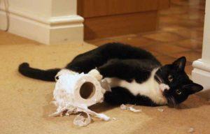Chat détruit papier toilette