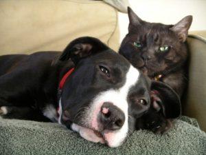 Chat dort avec chien