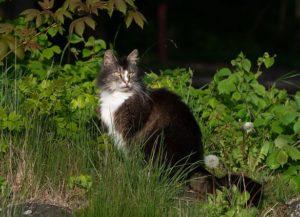 Chat sort dehors