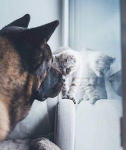 chaton s'entend bien avec chien