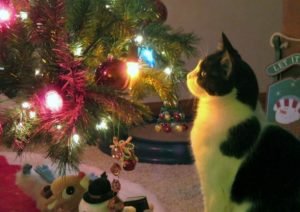 chat-curieux-sapin