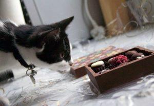 chat-mange-aliment-dangereux