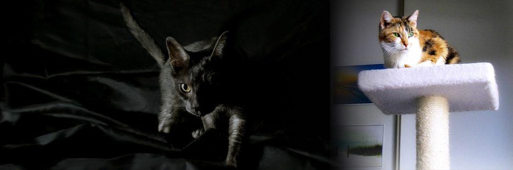 article-chat-enrichissement