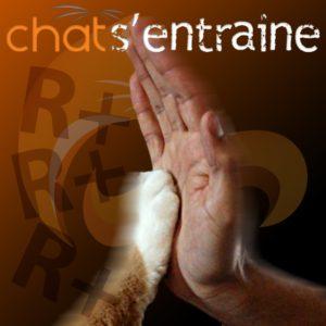 Chat-entrainement-clicker