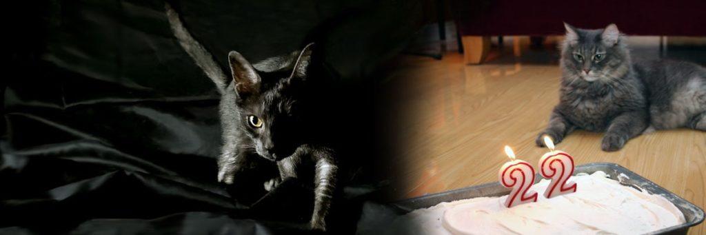 article-sur-chat-senior