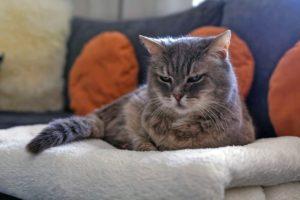 Chat-vieillit-dort-beaucoup
