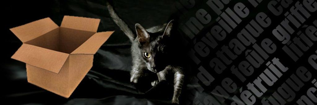 déménager-avec-chat-chaton