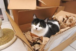 chat-joue-cartons