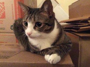 chat-sur-cartons