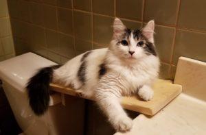 chat-salle-de-bain