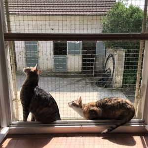 protection-fenetres-chats