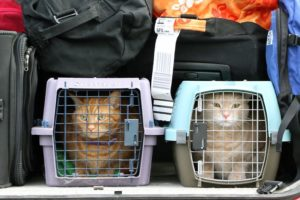 chat-caisse-transport